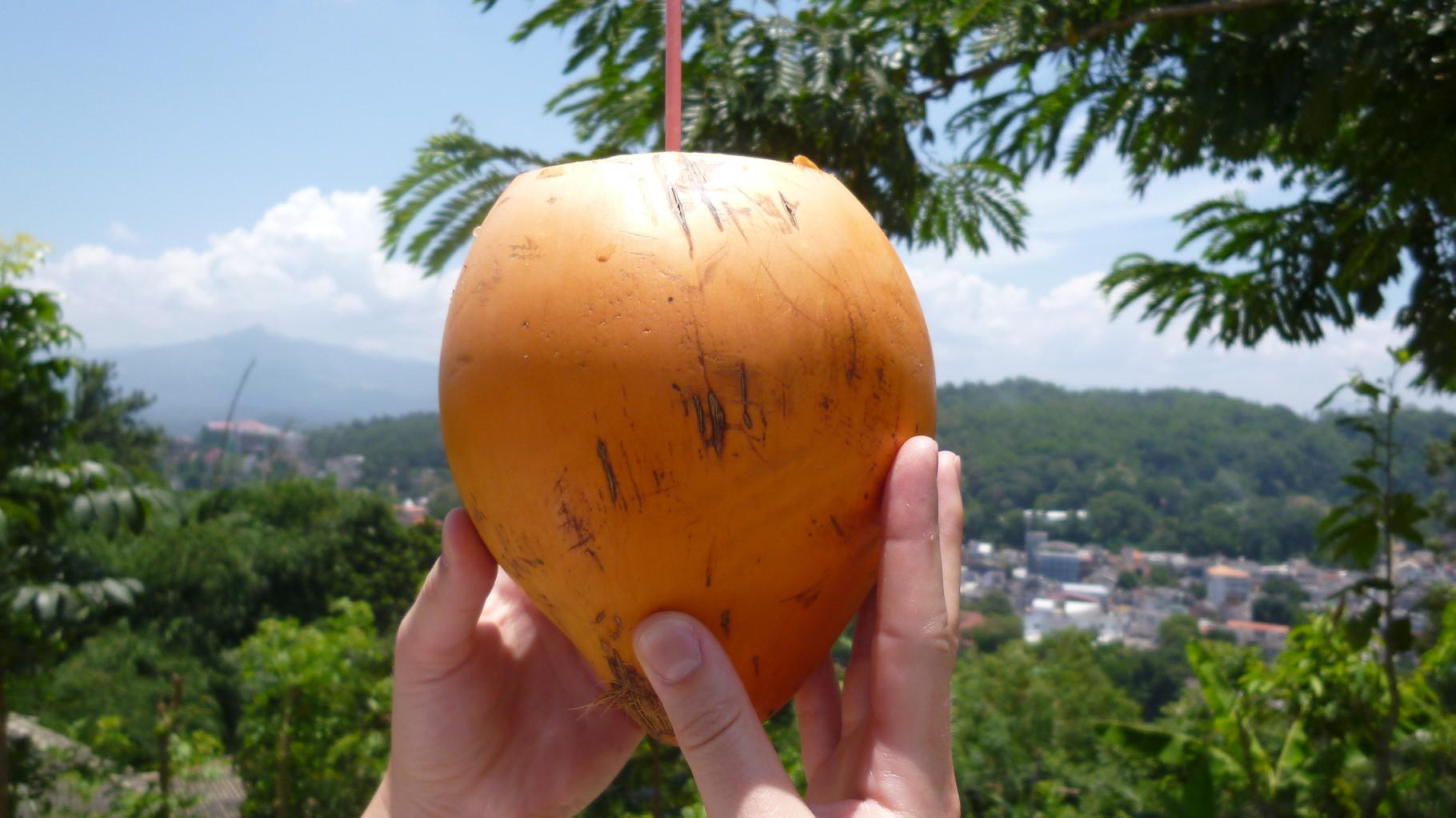 King Coconut - DAS Getränk in Sri Lanka