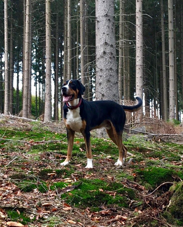 BRUNO (Dexter)