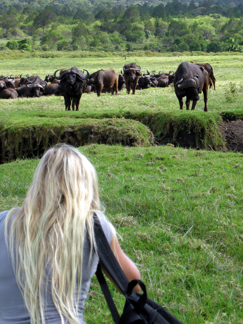 Tansania: Büffelpirsch zu Fuß