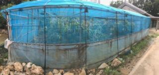 裏庭 家庭菜園
