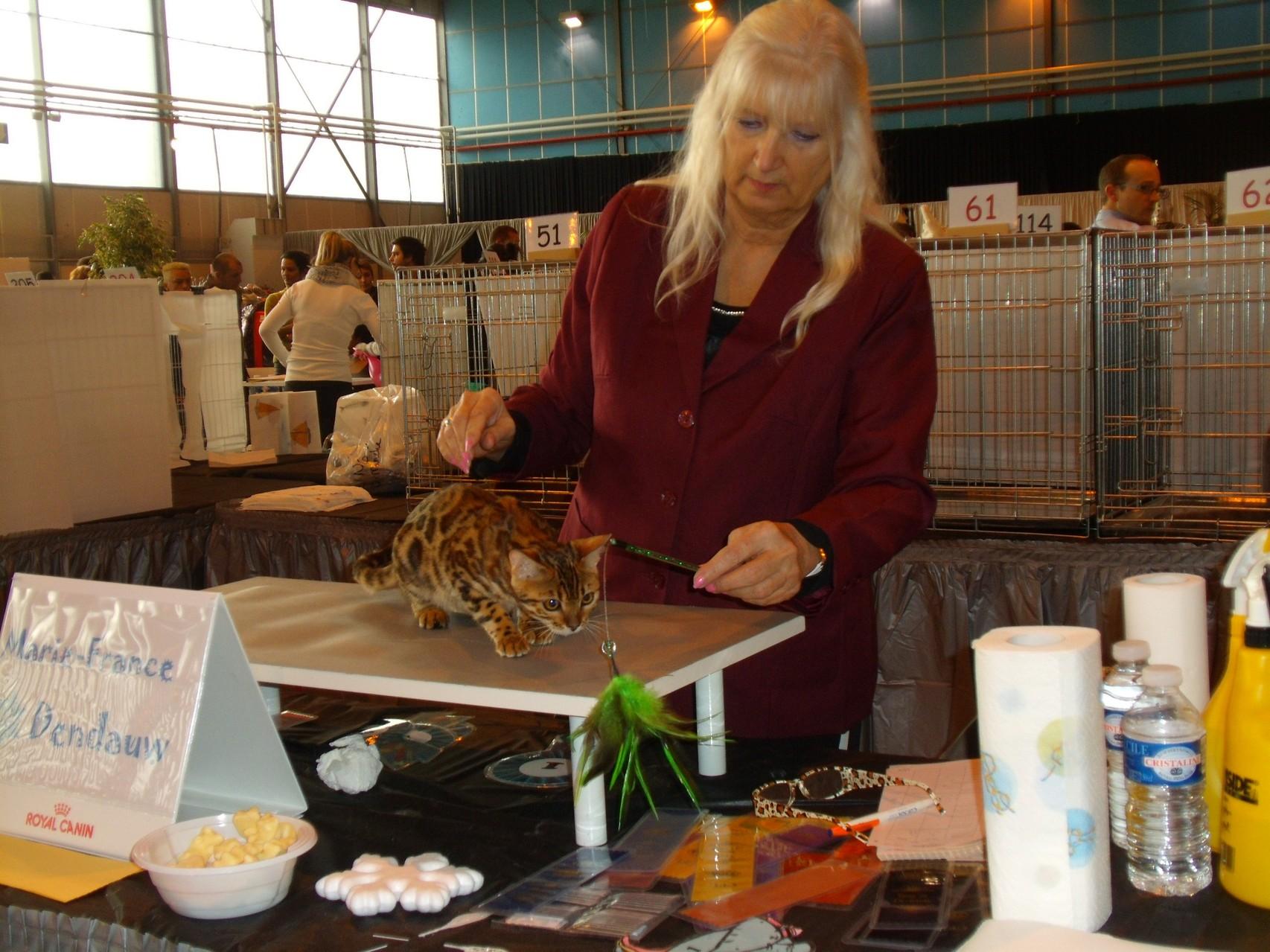 Exposicion felina Toulouse con Marie France Dendauw (juez AB) - 08-02-2014