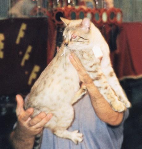Gr.Ch.Int. Alfama's Bataro of manekineko-1997