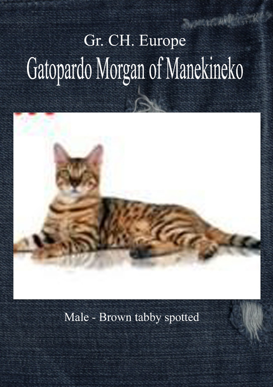 Gatopardo Morgan of manekineko