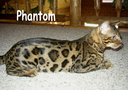 amantra phantom spirit of legacie