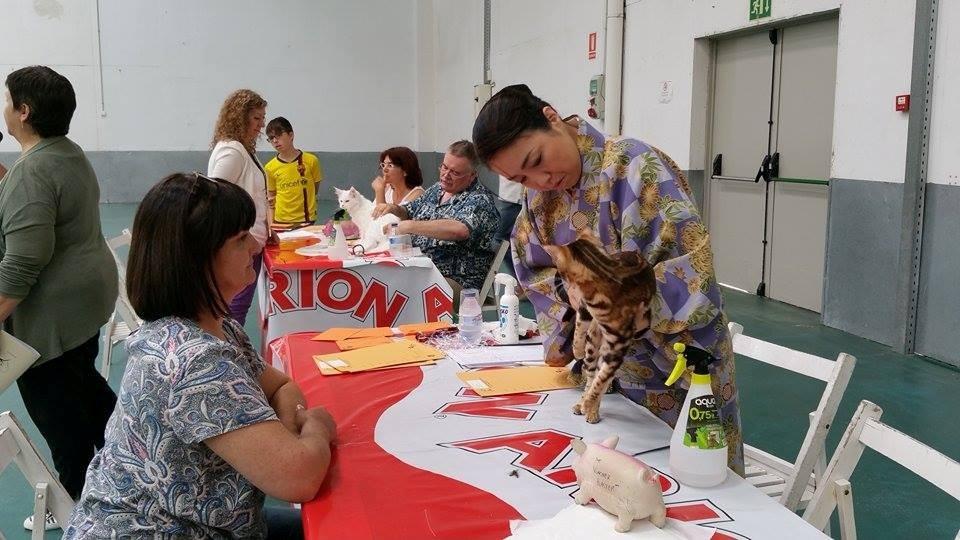 Con Tomoko Vlach (juez AB) exposicion felina en Vic (españa) 31-05-2015