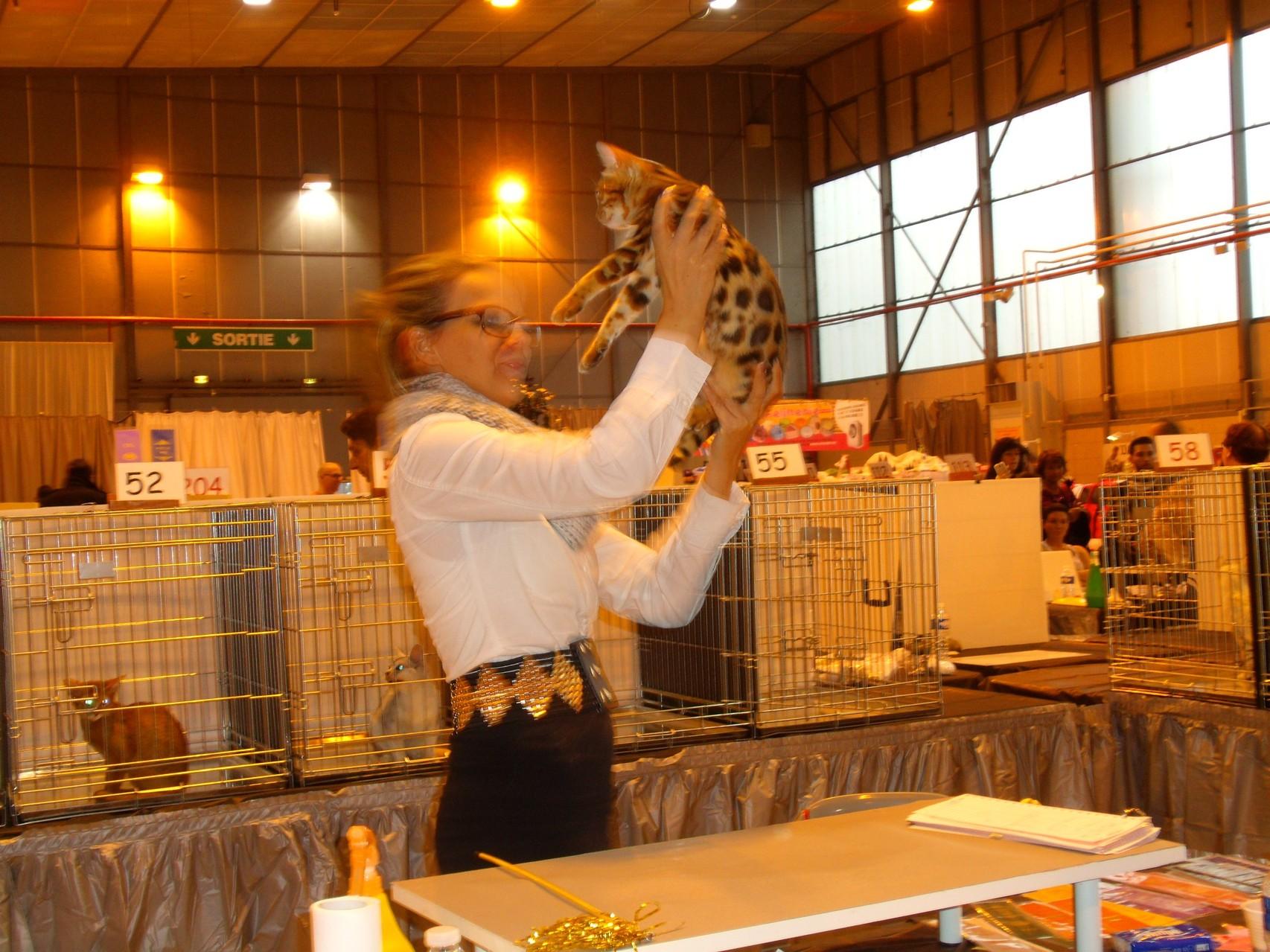 Exposicion felina Toulouse con Katarina Krenn (juez AB) - 08-02-2014