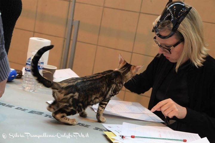 Con Katarina Krenn (juez AB) en la exposicion felina de Toulouse (francia) 08-02-2015