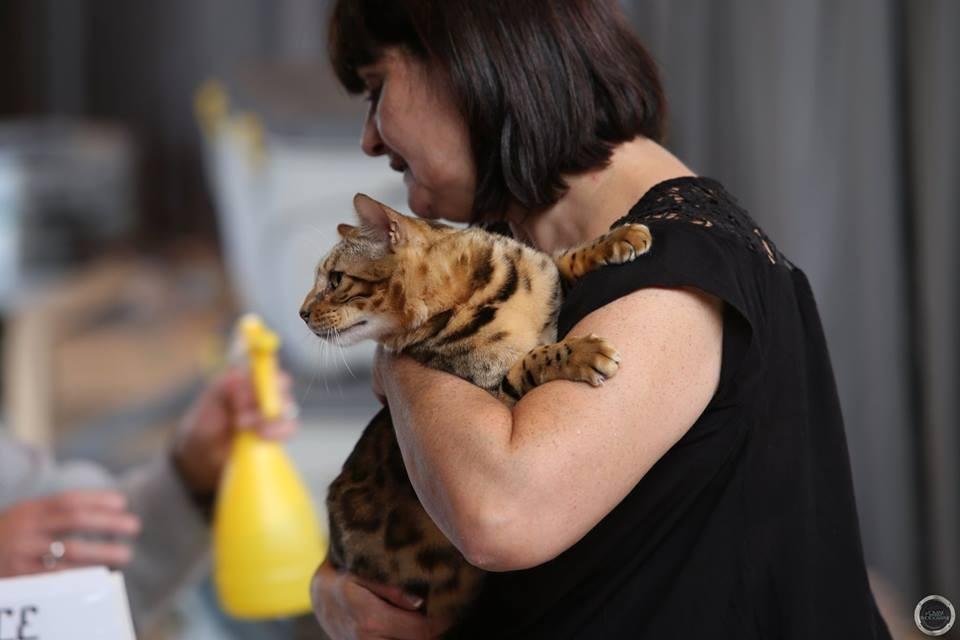 Exposicion felina de Toulouse 25-10-2015