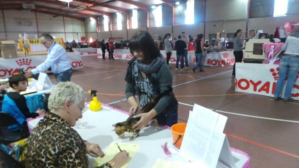 Le crés-Montpellier (Francia) exposicion felina internacional LOOF 01-11-2015