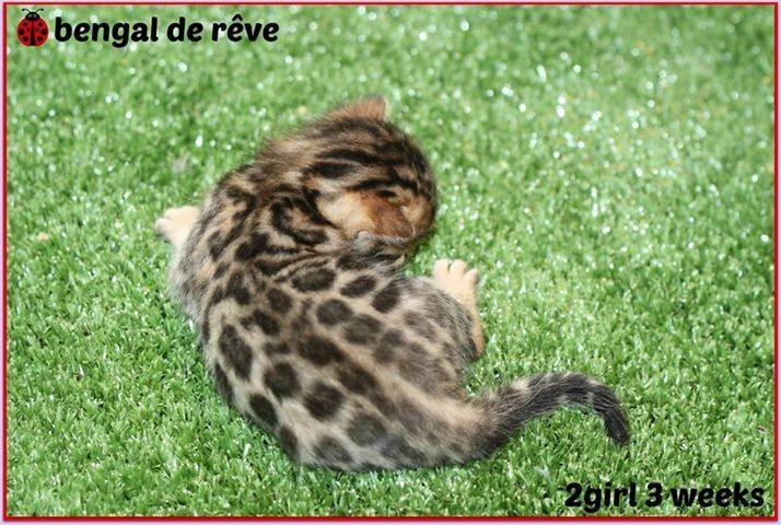 Une mini léopard