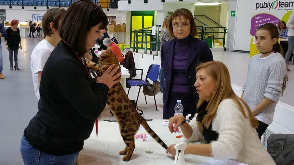 Exposición felina Mundial de MONZA (Italia) 23-01-2016