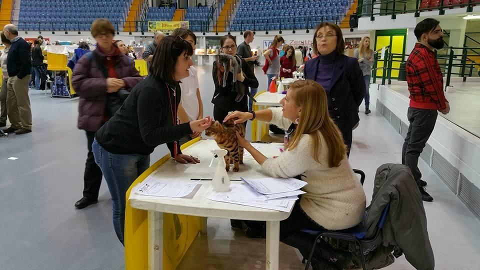 Monza (Italia) exposicion mundial felina 23 y 24/01/2016