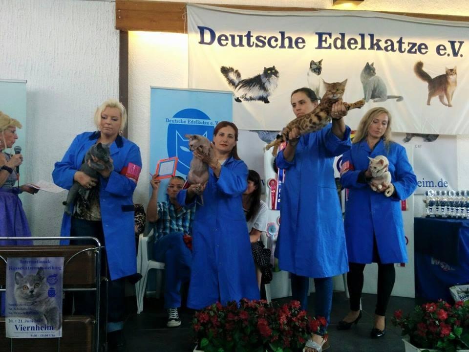 Alemaña exposicion internacional felina WCF 06/2015