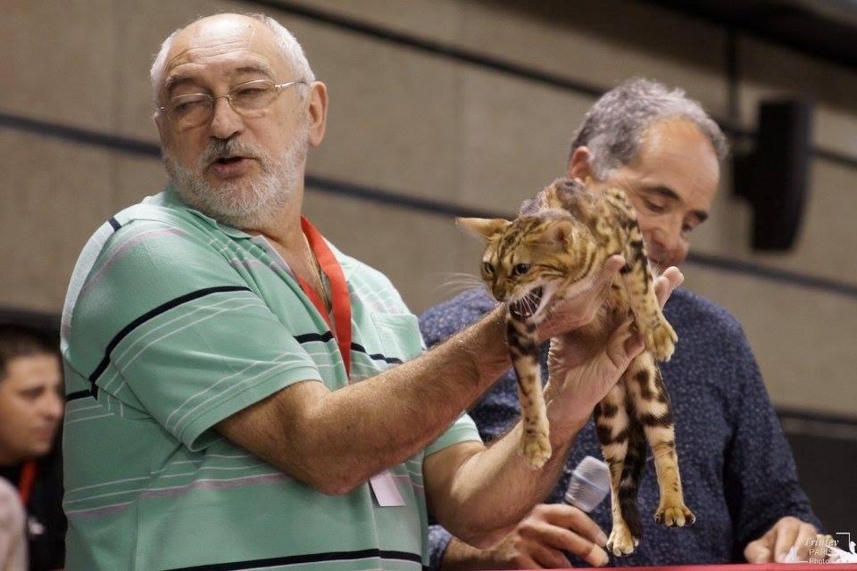Reus (España) exposicion felina internacional WCF 03-2016