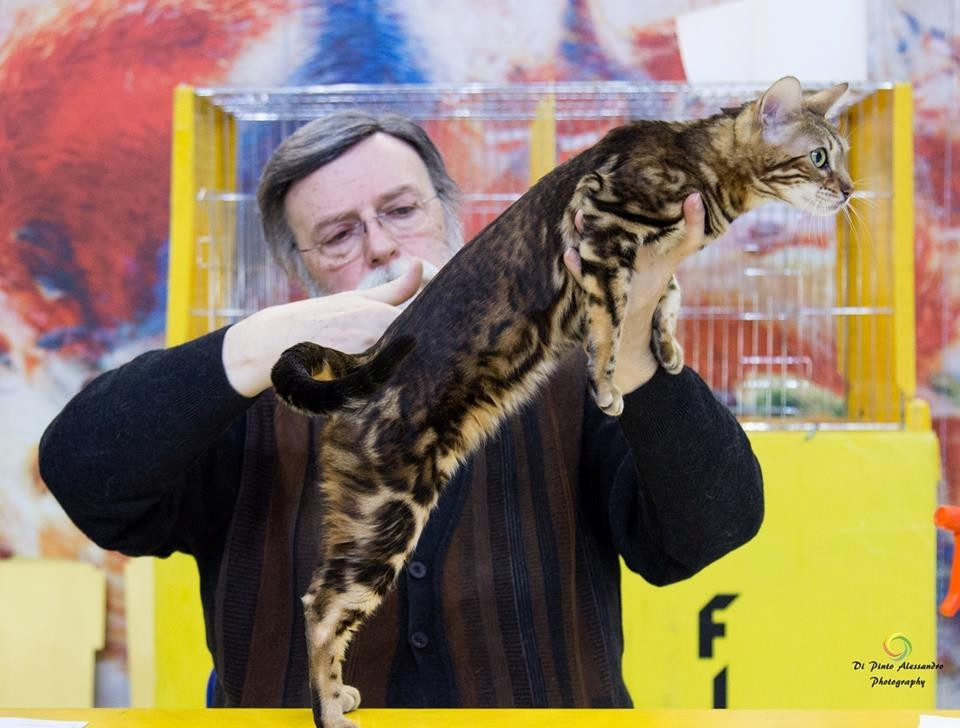 Manekineko Juliette has a gun, exposition feline mondial WCF à Monza(Italie) 23-01-2016