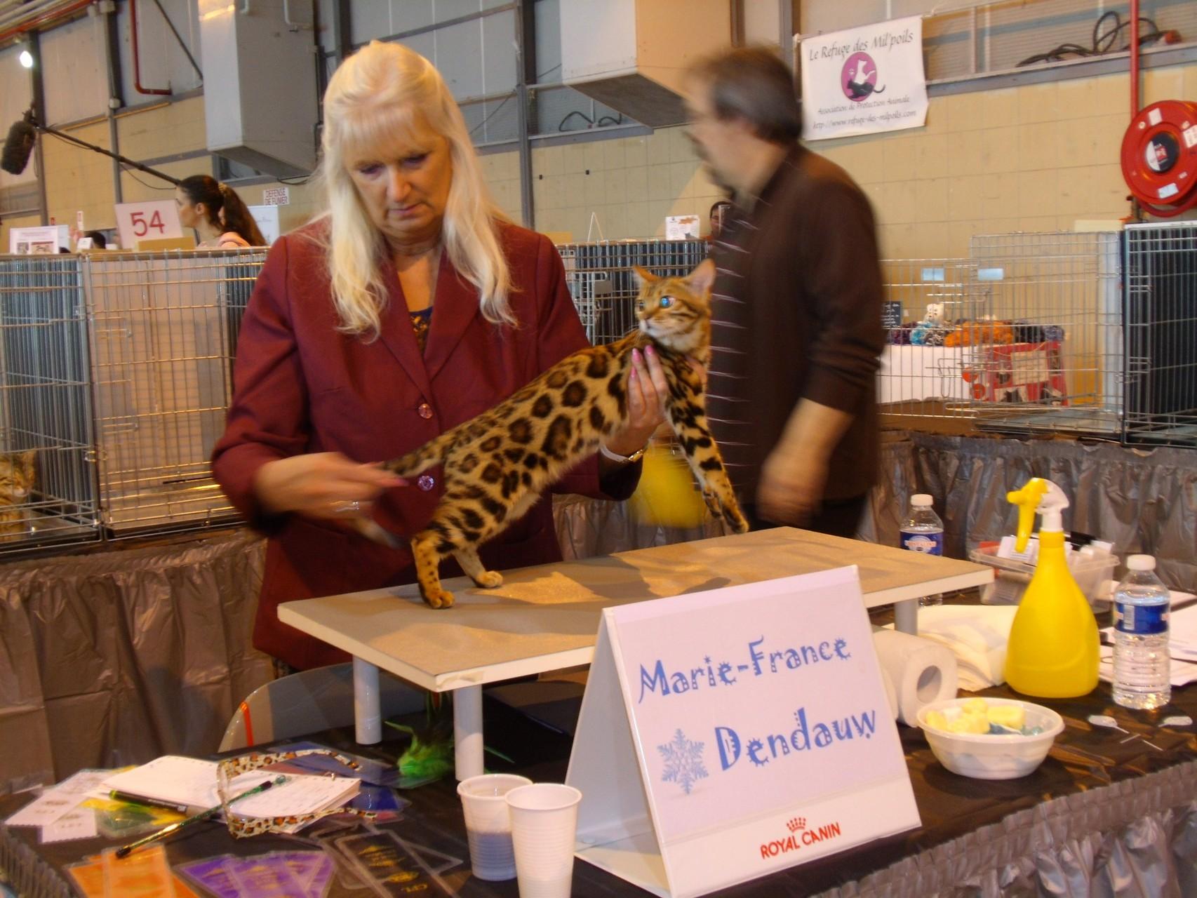 Toulouse (Francia) exposicion felina internacional LOOF-TICA 08 & 09/02/2014