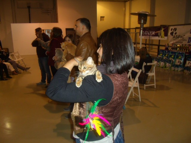 Exposicion felina de Terrassa (españa) enero 2015