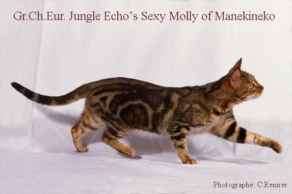 Gr.Ch.Europe Jungle echo's sexy molly of manekineko