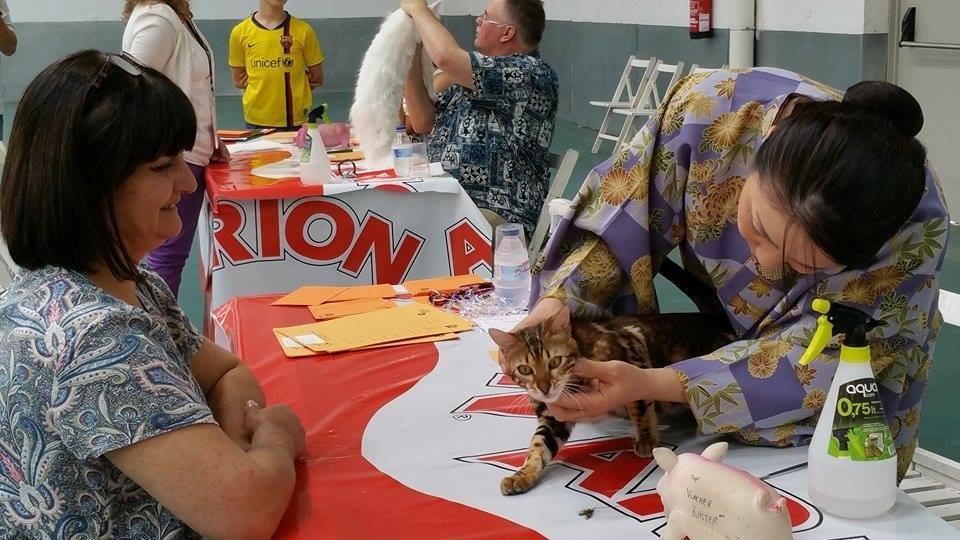 Vic (Barcelona) exposicion felina internacional WCF 30-05-2015