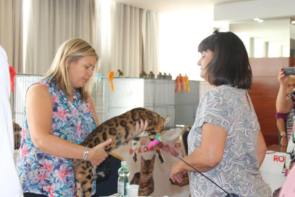Valencia exposicion internacional felina ASFE-FIFE 12 y 13/09/2015