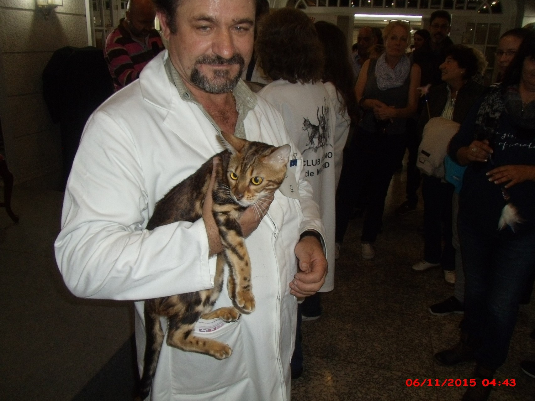 Madrid, exposicion felina internacional WCF 07-11-2015