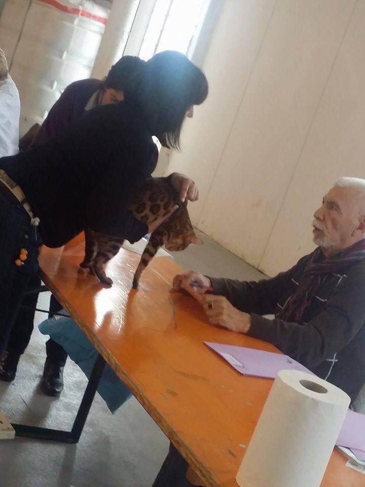 Avec Mr Guy Gringet (juge AB) exposition feline de Manressa (espagne) 22-11-2014