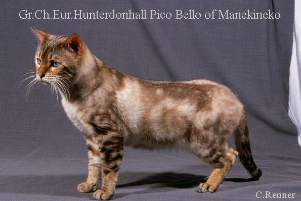 Grand champion d'europe Hunterdonhall Pico Bello of Manekineko