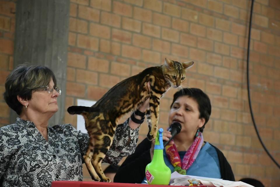 Lleida (España) exposicion felina internacional WCF 03-04-2016