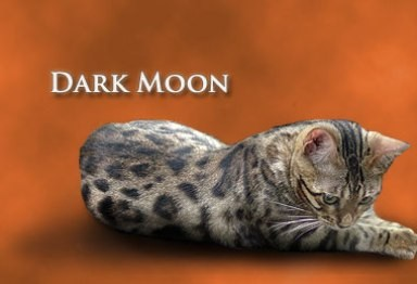 junglemist dark moon