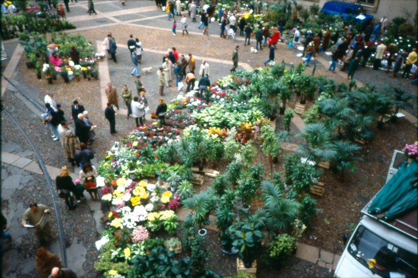 Domenica mercato dei fiori Piazza Duomo anni 2000