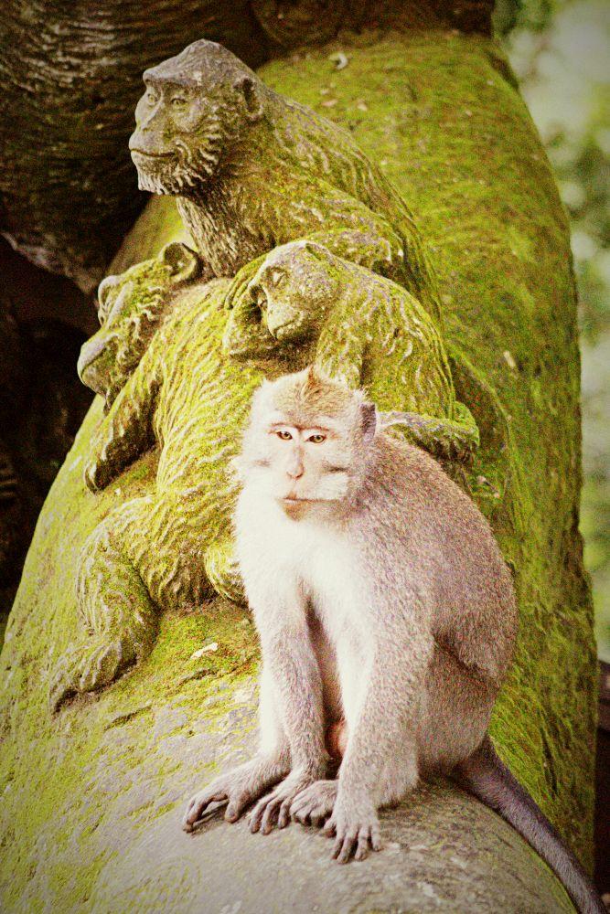Monkey Forrest in Ubud
