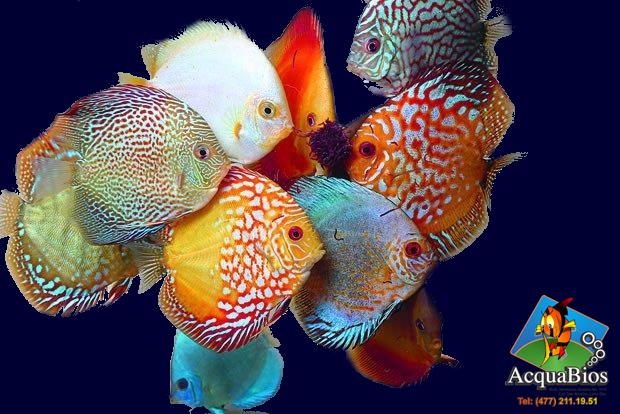 110 m2 de exhibición y una sala de peces con más de 3mil litros de agua donde se albergan 190 variedades semanales