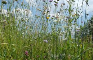 la biodiversité au coeur de la permaculture