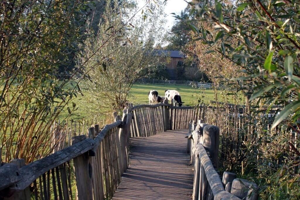 Holzpfad im Tierpark Nordhorn