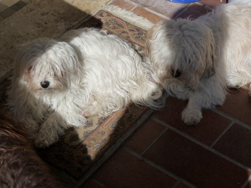 Mia und Lou