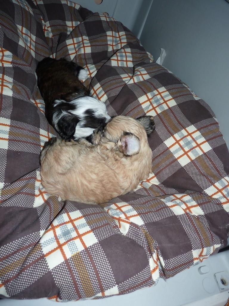 Bella und Bernardo beim Schlafen
