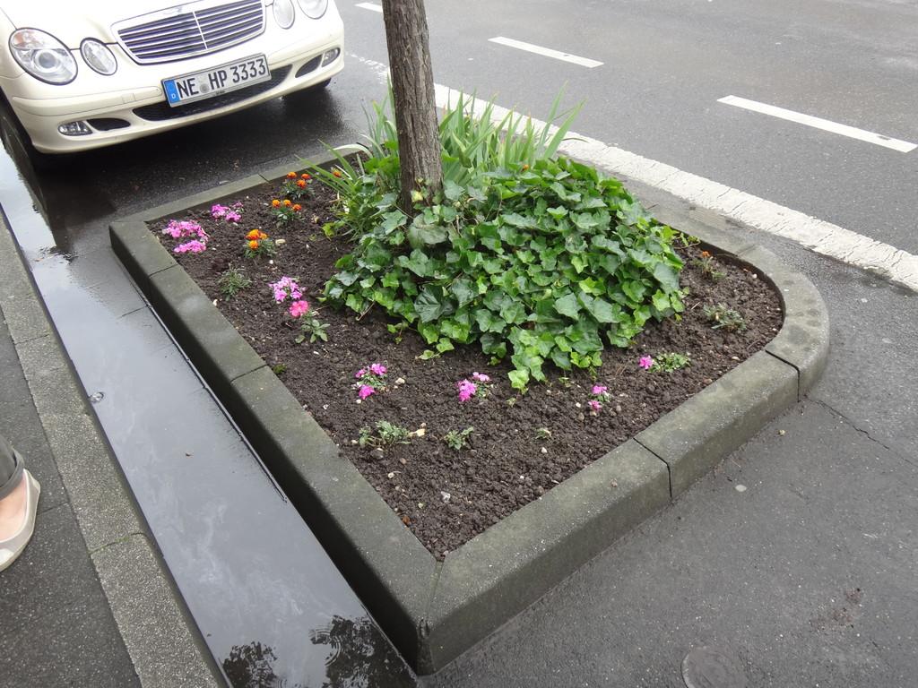Guerilla-Gardening macht das Viertel schöner