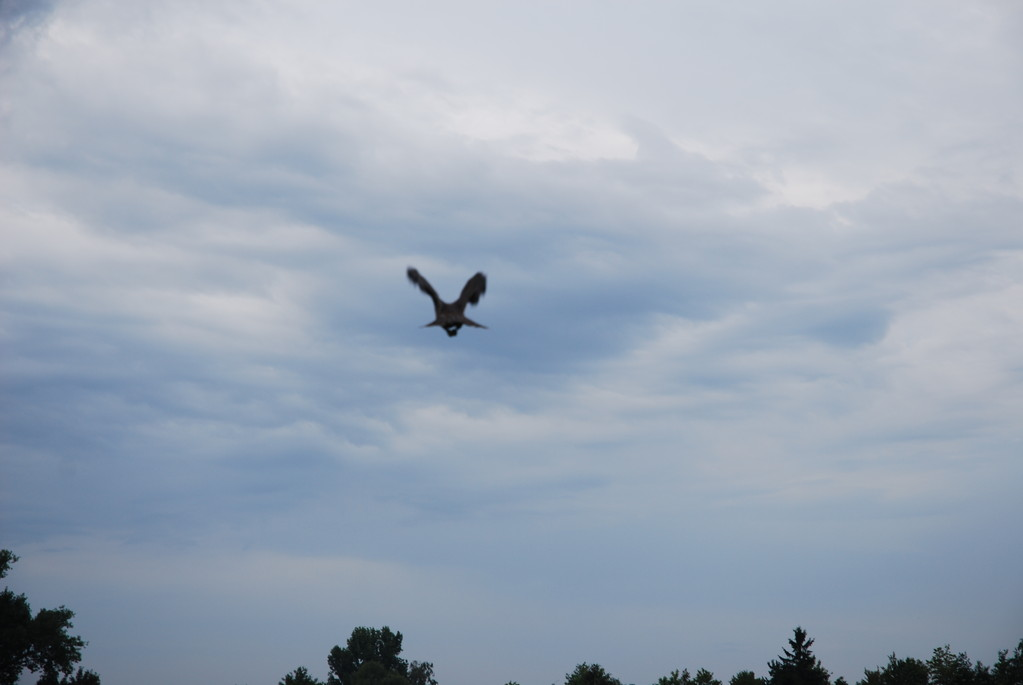 Abflug in die Freiheit