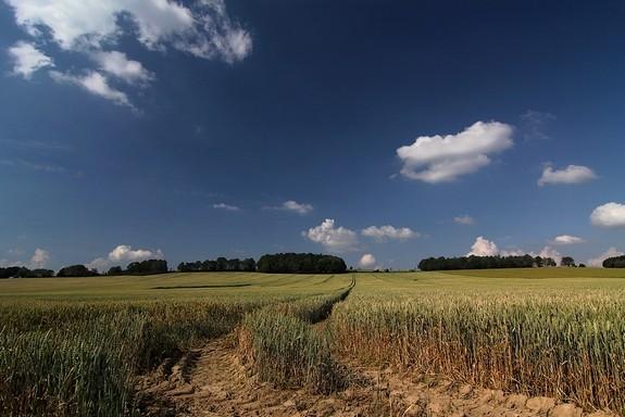 18.07.2013 nachmittags bei Kleinhartmannsdorf , Sonne+zunehmende Trockenheit