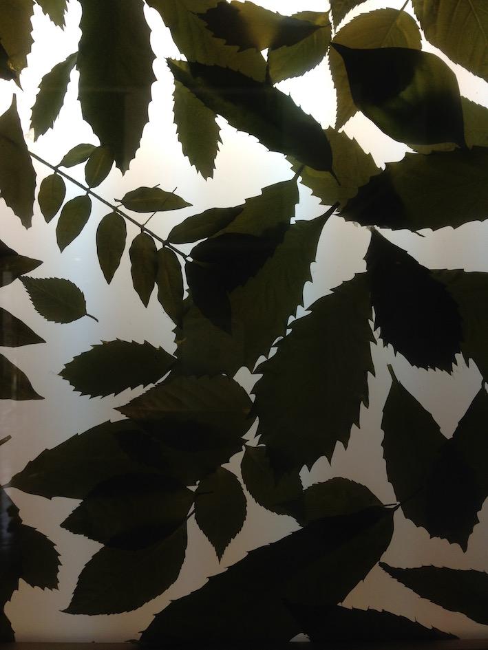 20150227 現場近くの施設で見つけた木の葉たち。