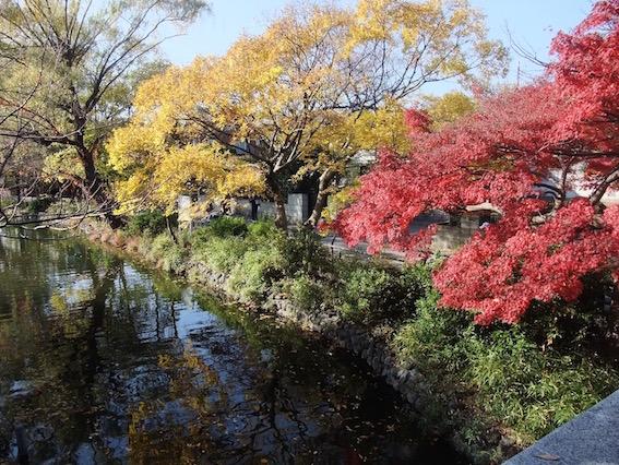 2013.11.24 近くの石神井公園のいろどり。