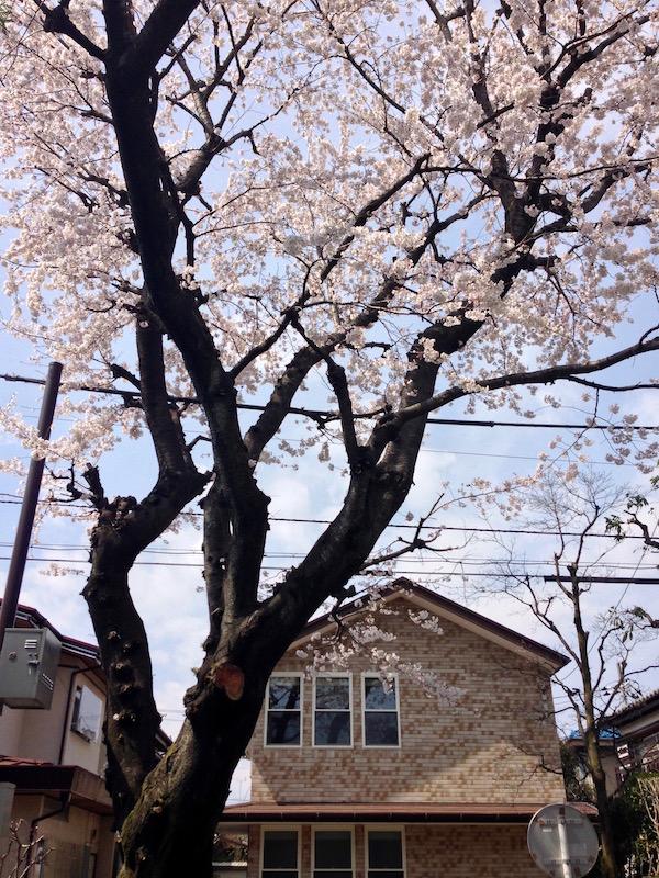 2014.04.01 春が来ました.