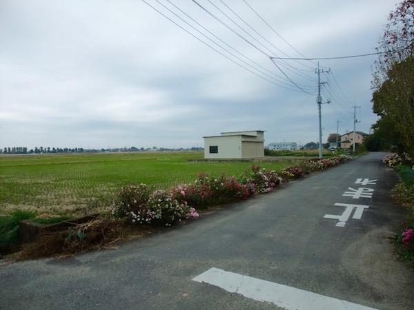 2014.11.08 敷地北側の広大な田んぼ.季節で色が変わります.彩ですね.