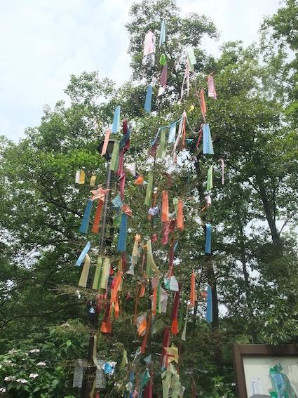 2013.06.25 現場近くで見かけた石神井公園の七夕飾り