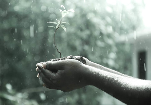 Hands holding soil in rain.
