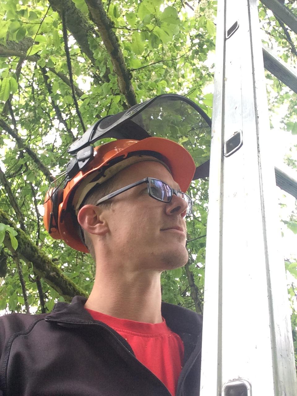 Auf der Leiter im Baum