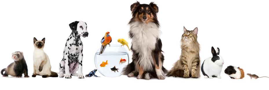 Huisdierenoppas aan huis, individuele aandacht en zorg, kat, konijn, cavia