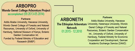 What is ARBONETH? - ARBONETH