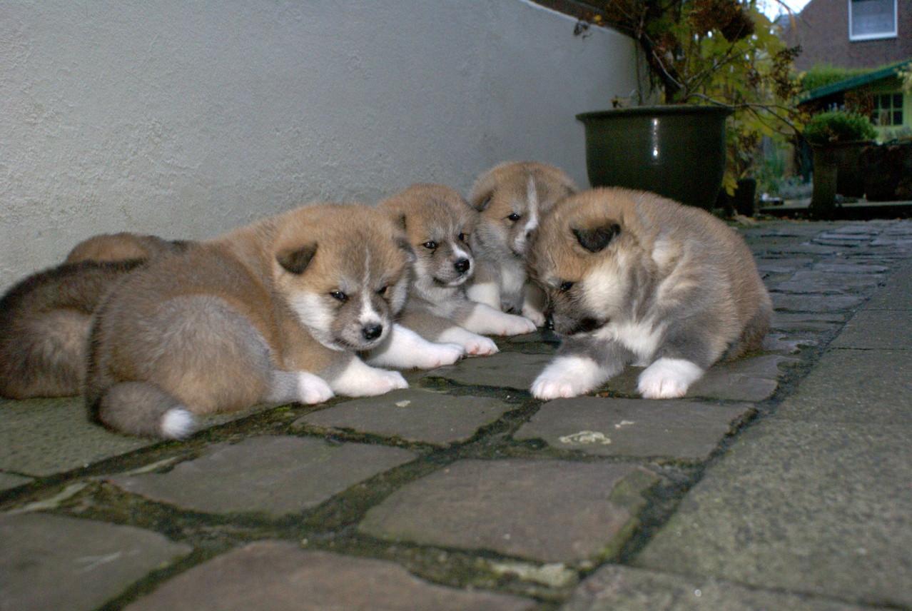 von links: Arata, Aimi, Akito und Aki