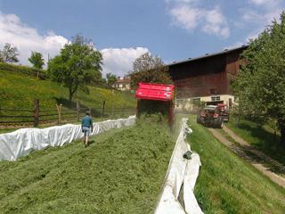 Unser Fahrsilo wird mit Gras befüllt